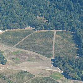 aerial vineyard view