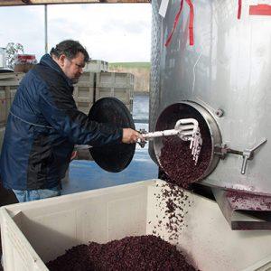 winemaker raking wine tank