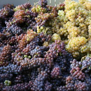 red and white grape clusters in bin