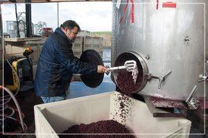 winemaker raking grapes from tank